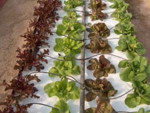 pomice per piante palermo sicilia